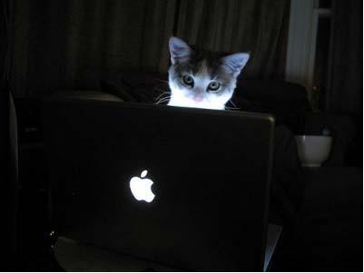 Katzen würden Apple kaufen