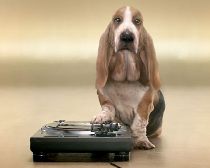 Beatboxing Basset