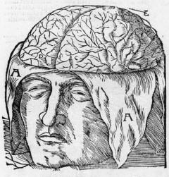 Illustration aus: Anatomia Mundini, Mondino de Luzzi / Dryander, Jonas